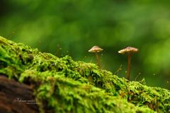 苔の森の住人たち