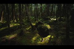 苔と光と影と