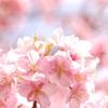 春ですね。2