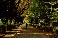紅葉散歩道