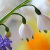 スズラン水仙と春の仲間達