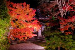 天授庵庭園夜景