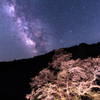 銀河望む駒桜