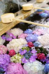 手水舎の紫陽花Ⅱ