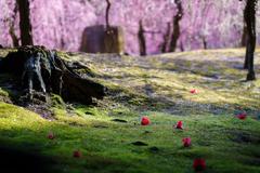 落ち椿、春に包まれ