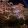 春夜に浮かぶ花明かり