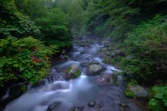 深緑の流れ