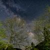 新芽と銀河