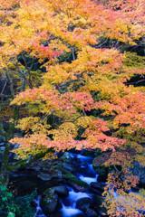 奥三河の秋色