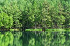 深き森の湖