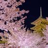 東寺夜桜2