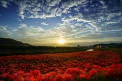 秋空に映える彼岸花