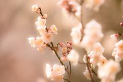 早春の光を浴びて