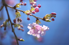 spring  pink color3