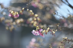 spring  pink color1
