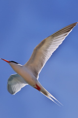 wing!!