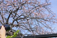 春を撮る・・・