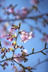 spring  pink color2