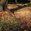 落ち葉に囲まれて・・・