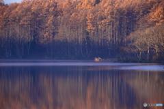 晩秋の色 8