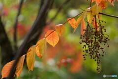初秋の彩り