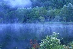 ゴマナの咲く湖畔