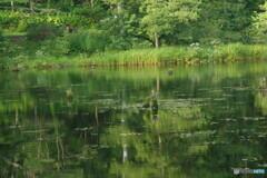 みどりが池