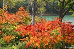 秋の池巡り 1