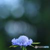夏の終わりの花 4