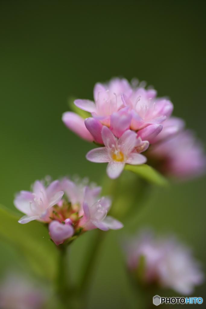 小さな小さな花