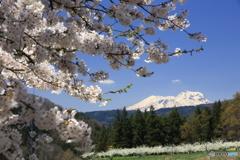 桜のある光景 7