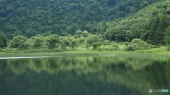 夏の池 1