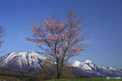 桜のある光景 12