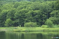 夏の池 3