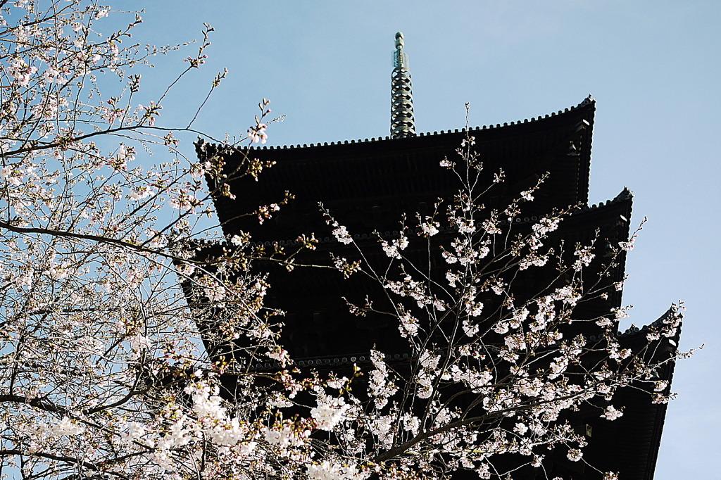 京都・仁和寺