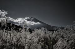 初冬富士 モノクロ