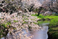 春の小川 -忍野-