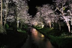 桜色の夜の川