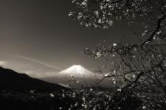 富士 こぶし