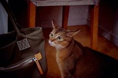 猫にカバン