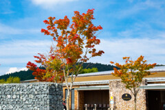 峰山高原の秋