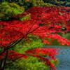 再度山の紅葉