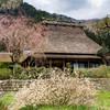 美山の春景