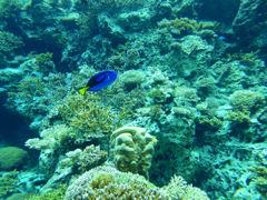 美ら海水族館 1