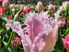 綺麗な花にはトゲがある