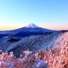 朝陽に色付く樹氷