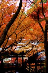 kyoto -fall-