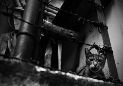 Tokyo alley cat