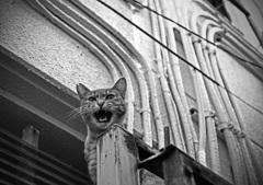 東京怒り猫