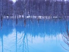 白金の青い池☆